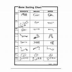Owl Pellet Sorting Chart Owl Pellet Bone Sorting Chart Set