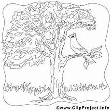 Malvorlagen Vogel Kostenlos Ausmalbild Vogel Auf Dem Baum
