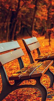 Iphone Wallpaper Fall Hd by Awesome Autumn Wallpapers For Your Iphone Hd The Nology