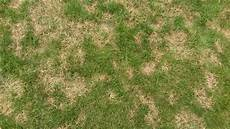 Brown Patch Grass Quick Tips For Avoiding Brown Patch