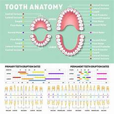 What To Do When Your Child Has A Tooth Dental
