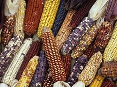 Corn Varieties Corn Ain T All That Bad The Arid Land Homesteaders League
