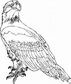 Malvorlagen Kinder Adler Adler 3 Ausmalbild Malvorlage Tiere