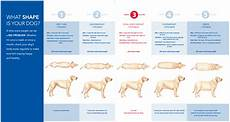 Ideal Weight For Dogs Weight Chart Ideal Dog Weight Chart The Labrador Forum