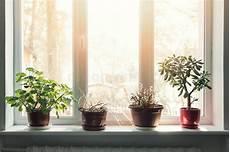 piante da davanzale piante d appartamento in vasi sul davanzale soleggiato