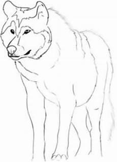 desenho de lobos lobo meia noite maio 2011