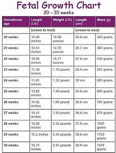 30 Weeks Baby Size Chart Pin On Baby