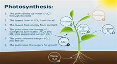What Does Light Energy Mean What Is Photosynthesis Simple Definition For Tasks