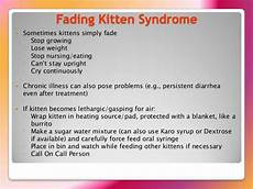 Kitten Eating Chart Neonatal Bottle Baby Program