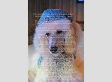 """The Poodle""   Deja vu is the background model   Poodles"