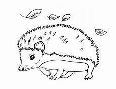 free hedgehog coloring page