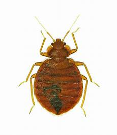 bed bug killer products professional bed bug