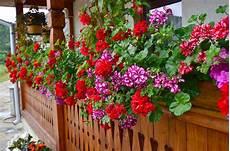 fata care acasa 7 plante pe care oricine trebuie sa le aiba in casa