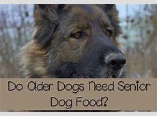 Do Older Dogs Need Senior Dog Food?