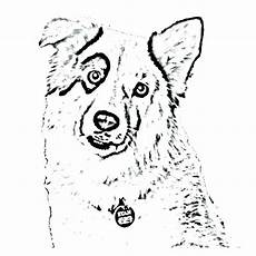 border collie coloring pages at getcolorings free
