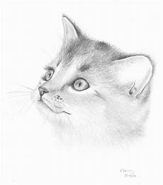 Cat Drawing Images Pencil Drawing Of A Smiling Cat Drawing By Emmanuelle Fonsny