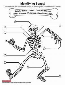 learning about bones worksheets printables