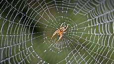 web bid spider san diego zoo animals plants