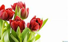 flower wallpaper hd size 30 beautiful coloured flowers pictures size hd