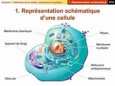 Definition De La Pnl D 233 Finition De La Cellule Cytoplasme Et Du Cytosol Youtube