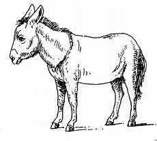 Malvorlage Esel Einfach Esel 3 Ausmalbild Malvorlage Tiere
