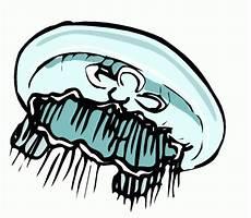 Malvorlagen Qualle Kostenlos Gratis Qualle Ausmalbild Malvorlage Tauchen
