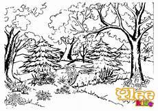 Ausmalbilder Erwachsene Wald Ausmalbilder Wald Ausmalbilder
