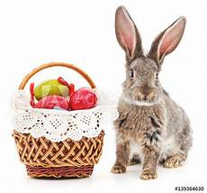 quot easter bunny with colored eggs quot stock photo and royalty