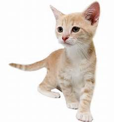 Kitten Eating Chart Alley Cat Allies How Old Is That Kitten