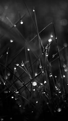 Black And White Photography Iphone Wallpaper by Forest Iphone Wallpaper 74 Images
