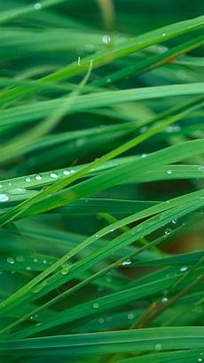 Iphone Wallpaper Hd Green by Green Dew Grass Leaf Iphone 7 Wallpaper In 2019 Green