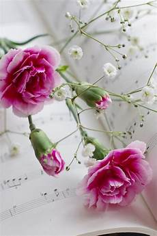 Flower Wallpaper Song by Pink Flowers And Wallpaper Allwallpaper In 7114