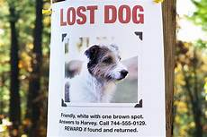 Lost Dog Poster Maker 6 Tips On How To Find A Lost Puppy