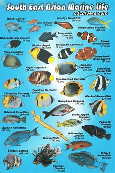Maine Fish Species Chart Fish Identification Mullowaydive Adventures