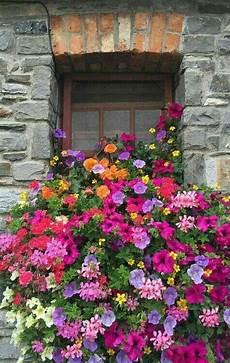 fioriere da davanzale pin di oya s 246 zeren su ev fiori da balcone fioriere per