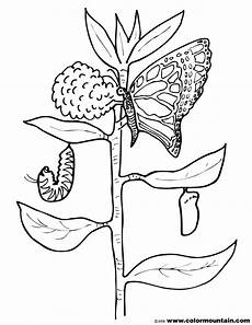 Malvorlage Raupe Schmetterling Zebra Longwing Butterfly Pages Coloring Pages