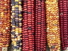 Corn Varieties The Serious Eats Guide To Corn Serious Eats