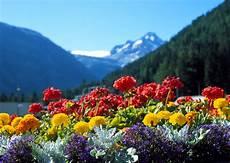 fiori tra l asfalto il profumo dei fiori iride