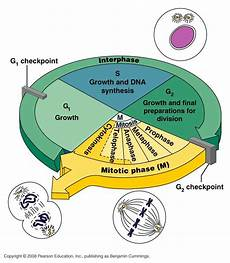 Interphase Chart Csir Life Science Preparation Fundamental Processes