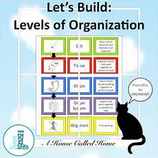 Levels Of Organization Let S Build Levels Of Organization By A House Called Home