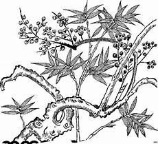 malvorlagen urwald zum ausdrucken pflanze im urwald ausmalbild malvorlage blumen