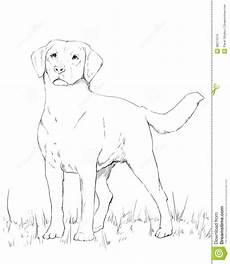 labrador standing stock illustration