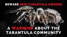 Tarantula Chart Tarantula Heaven In 2020 Tarantula Spider
