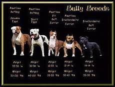 Staffordshire Bull Terrier Weight Chart Great Picture That Shows The Bully Breeds Bully Breeds