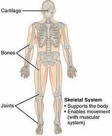 11 Body Systems 11 Organ Systems Their Important Functions In Human Body