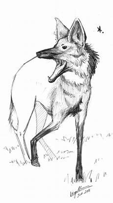 desenho de lobos desenhos esgalha animal esgalha lobo guar 225