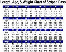 Flathead Catfish Length Weight Chart Length Age Weight Chart For Striped Bass Jpg Weight