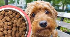 Goldendoodle Food Chart Best Puppy Food For Goldendoodles So He Grows Up Big And