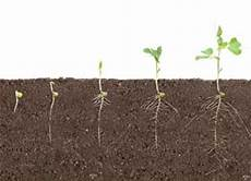 Pea Plant Growth Chart Soil And Plant Analysis Equipment Environmental And