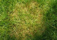 Brown Patch Grass Brown Patch Amp Large Patch Diseases Of Lawns Home